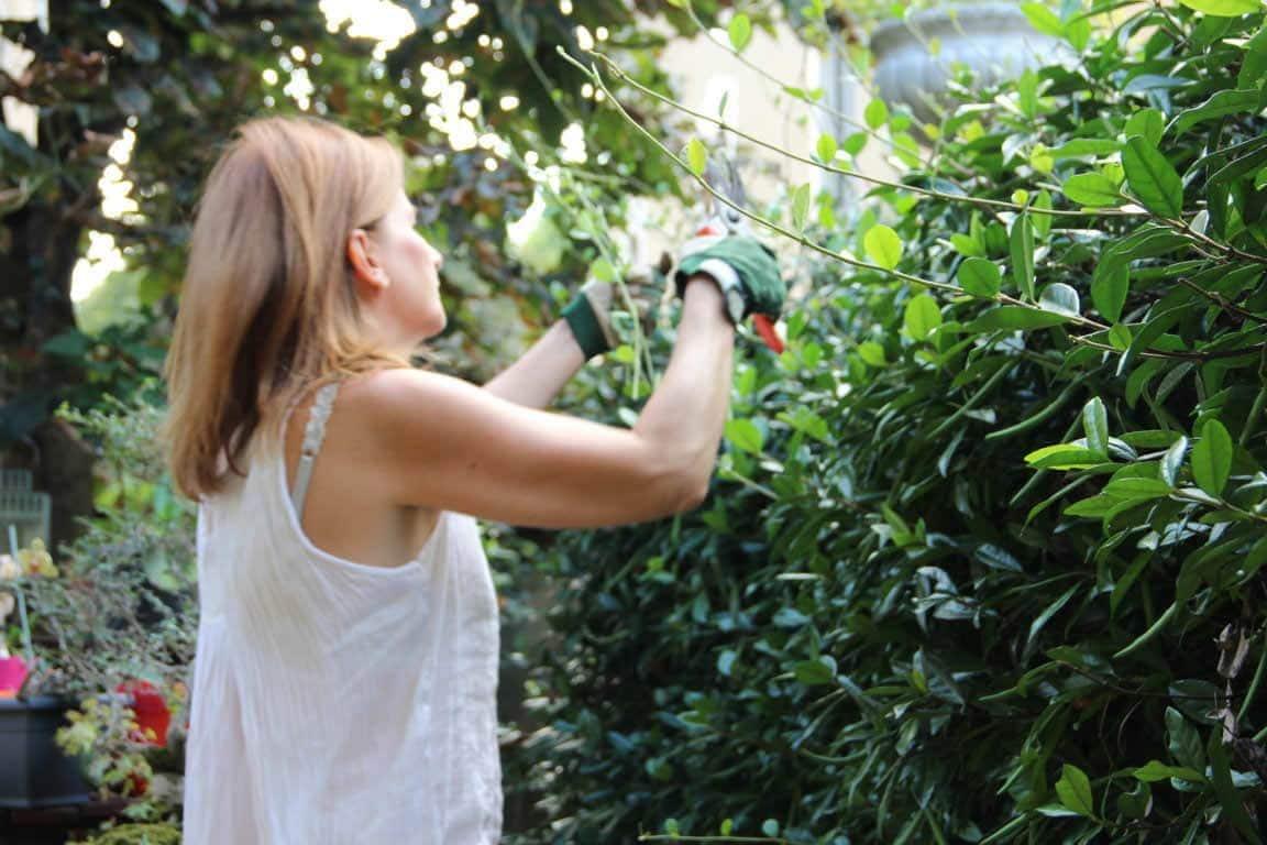 Roberta pruning