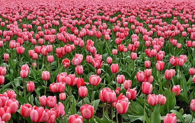 Messer Tulipano al castello di Pralormo